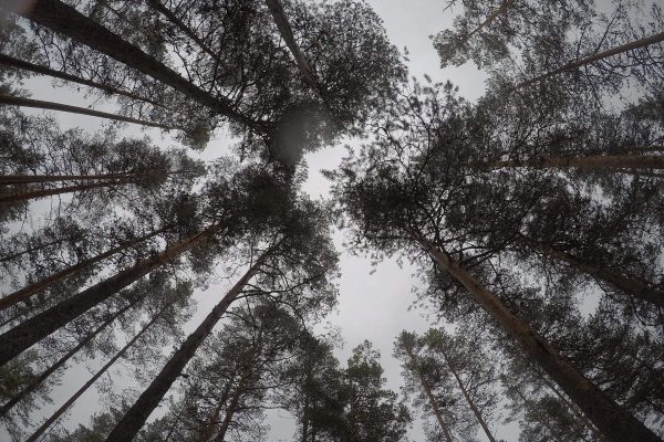 Nederlands-bos-groeit