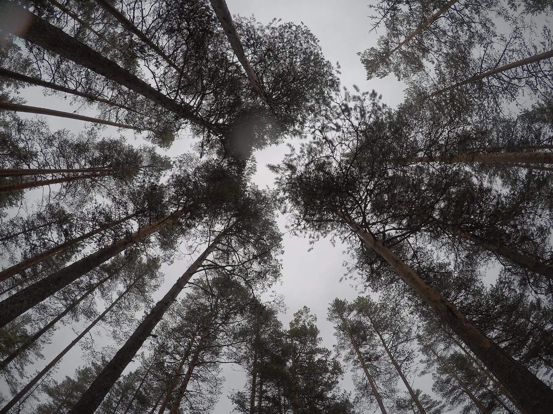Steeds meer bos in Nederland